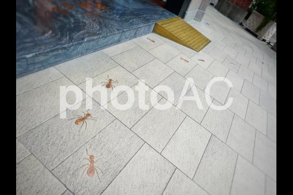 アリの集合の写真
