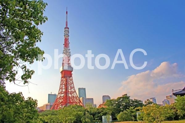 美しい東京タワーの写真