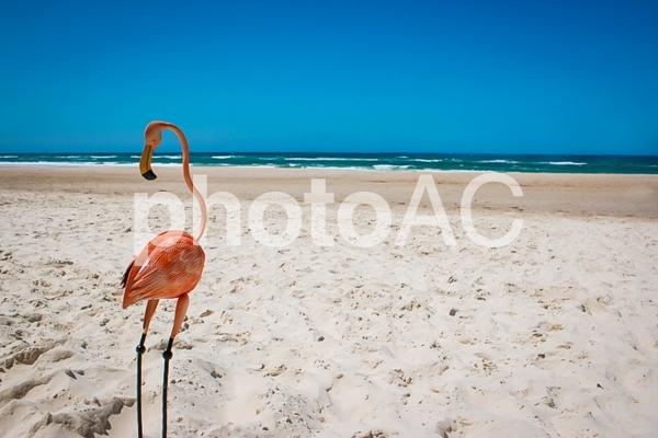 白い砂浜 フラミンゴ 常夏 夏 思い出 旅行 トロピカル ビーチ 青い海の写真