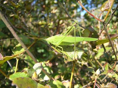 自然 風景 昆虫 ツユムシ 香川県 五色台