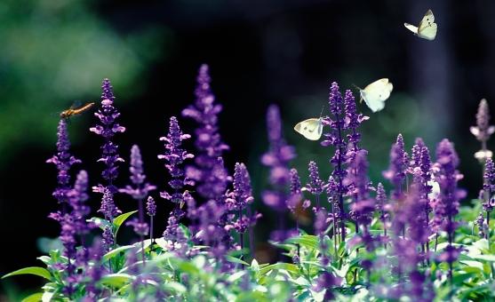 花を求めての写真