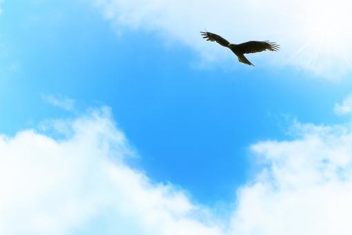 空 青空 大空 屋外 バック 素材 雲 爽快 テクスチャ バックグラウンド 背景 壁紙 背景素材 バックイメージ 透明感 クリア グラデーション グラフィック 鮮やか 自然 風景 風 真夏 初夏 夏 春 スカイブルー 水色 天空 太陽 輝き きらめき 光 まぶしい 暑い 日中 日光 天気 晴れ 快晴 気分爽快 さわやか 景色 白 飛ぶ 羽ばたく 翔 前向き ポジティブ 挑戦 スタート 誠実 寒色 暑中見舞い はがき ハガキ 葉書 ポストカード 鳥 猛禽類 とんび 鳶 鷹 力強い パワー 希望 若々しい 元気 コピースペース テキストスペース 余白 フレーム 酉年 年賀状 新年 旅立ち メッセージカード