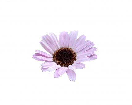 花6の写真