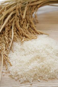 稲と白米5の写真