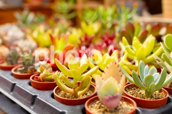多肉植物の写真