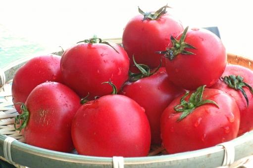 トマト tomato 野菜 緑黄色野菜 vegetable 植物 食べ物 食品 食材 食料品 食糧 食料 生鮮野菜 生鮮食料品 生鮮食品 夏野菜 食事 農業 農作物 agriculture 夏 季節感 seasonimage 栄養 リコピン