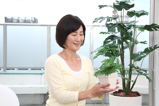 マダム おばさん 熟年 中年 老人 笑顔 スマイル 人物 女 おばあちゃん 植物 植木 日本人 60代 窓辺 窓際 座る 腰掛ける 観葉植物 グリーン 園芸 ガーデニング 見る 世話する 趣味 余暇 生活 暮らし ライフスタイル シニアライフ mdfs002