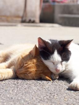 猫 ネコ ねこ 島 男木島 瀬戸内海 猫島 ネコ島 ねこ島 島猫 島ネコ 島ねこ ノラ のら 野良 ノラねこ ノラ猫 ノラネコ 野良ネコ 野良ねこ 野良猫 のらネコ のら猫 のらねこ 仲良し 空 青空 かわいい キュート 寝顔 寝る 熟睡 睡魔 ぐっすり 睡眠 ばたん ぱたっ 居眠り 眠り