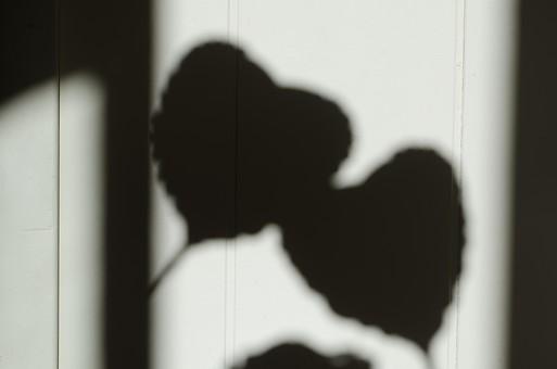 バレンタイン ヴァレンタイン ハート ハート型 影 陰影 シルエット 影法師 2つ シャドウ 影絵 愛 恋 告白 メッセージ モノクロ 白黒 ブラック ホワイト アート 恋愛 ラブ ラヴ 白背景 白バック ハートマーク マーク