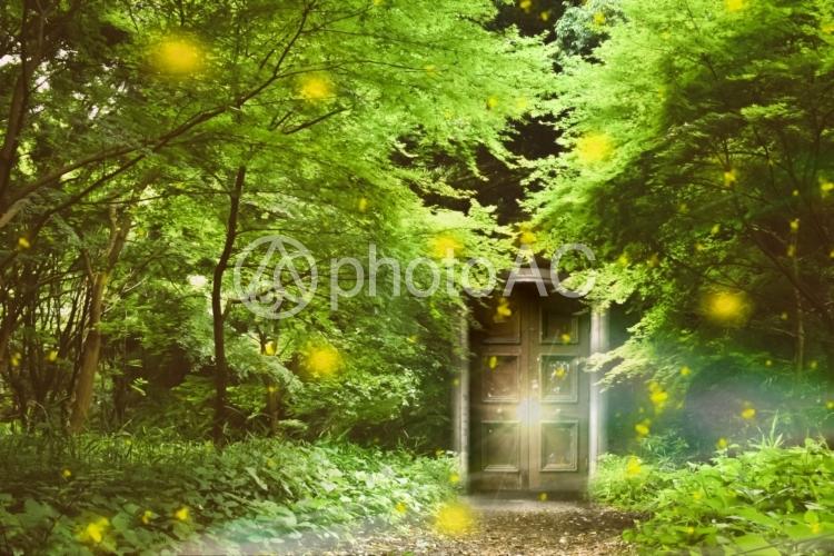 希望の扉の写真