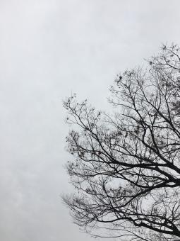 """「寒空 無料イラスト」の画像検索結果"""""""