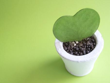 ハートの植物の写真