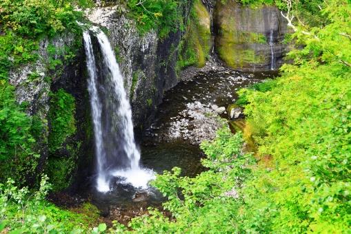 滝の流れ 涼しい滝 緑の葉 夏 滝 植物 植木 樹 木 樹木 緑 自然 屋外 風景 景色 葉っぱ 葉 茂る 水 落ちる 流れる マイナスイオン 滝壷 滝つぼ 森 生い茂る
