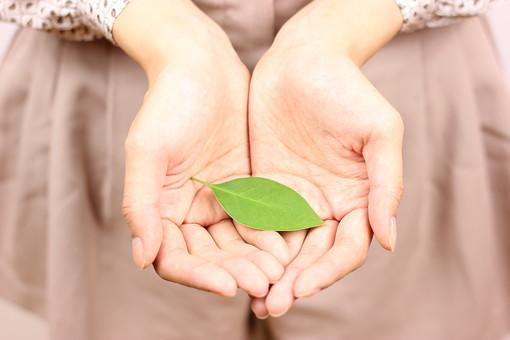 手のひら 手の平 掌 両手 指 緑 新緑 葉 葉っぱ 葉脈 エコ エコロジー 持つ 渡す 女性 女の子 ナチュラル 自然 植物 手 手元