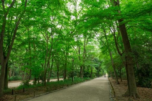 糾すの森 京都 下鴨神社 河合神社 緑 新緑 landscape nature 自然 歴史 建築