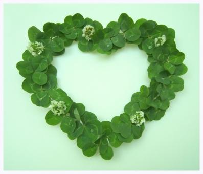 ハート クローバー みつ葉 シロツメクサ 植物 新緑 緑 みどり 白い花 背景素材 ハート型 草花 春