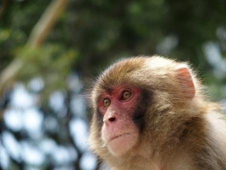 何かを見つめる猿