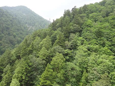 静か 喉か 平和 大地 自然 環境 問題 エコ 活動 風景 田舎 植物 リーフ 草 草花 大自然 生い茂る 茂る 緑 山 霧 ガス 雲 曇り 樹木 木々 森 森林 景観