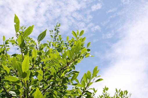 空 外 屋外 景色 風景 森 林 山 樹木 自然 樹 木 植物 葉 緑 晴れ 晴天 枝 葉脈 若葉 新緑 日差し 青空 幹 雲