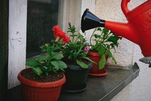 ガーデニング 園芸 栽培 花 草花 フラワー 植物 鉢植え 植木鉢 鉢 ポット 茶色 じょうろ 水やり 置く 並べる 遣る 注ぐ 育てる 水分 水 ガーデン 庭 庭園 庭先 窓 窓枠 網戸 庭仕事 庭いじり 作業 手入れ 世話 園芸用品 屋外 野外