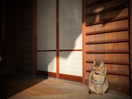 お寺の猫の写真