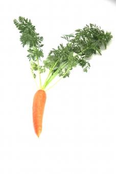 人参 ニンジン にんじん 野菜 植物 食べ物 葉付き オレンジ 一本 白バック コピースペース 緑 みどり
