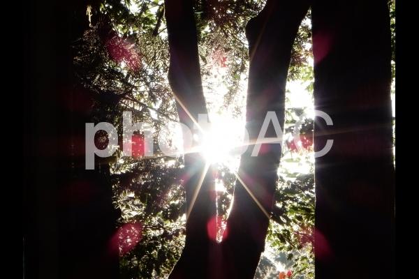 阿寺渓谷を木の隙間から覗き込む朝日の写真