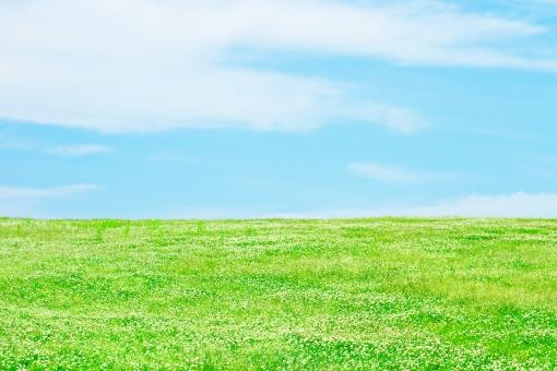 青空とクローバーの草原_6の写真