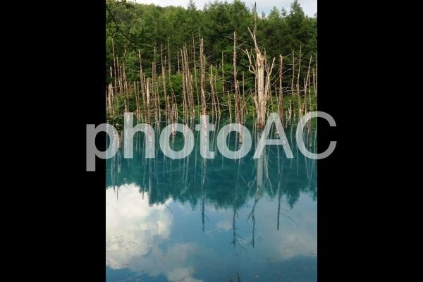 北海道 青い池の写真