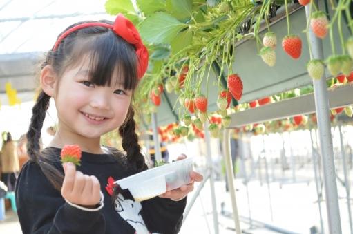 いちご イチゴ 苺 女の子 子ども 子供 こども 果物 いちご狩り