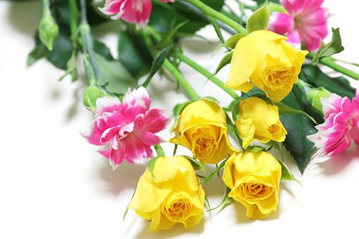 ばら バラ カーネーション ピンク 花 無垢で深い愛 女性の愛 熱愛 美しいしぐさ 植物 フラワー 種子植物 花弁 花びら 生花  葉 葉っぱ 4月 5月 6月 7月 9月 10月 ピンクの花 桃色の花 薄れゆく愛 11月