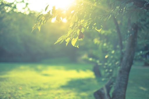 森林と草原2の写真