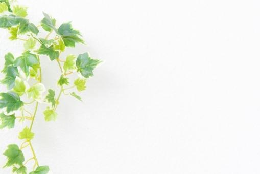 植物と白バックの写真
