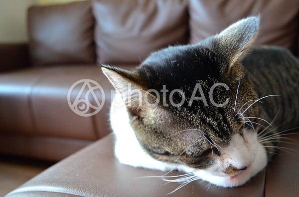 猫13の写真