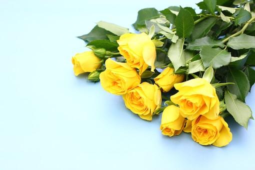 スペース 明るい プレゼント ギフト 花 生花 バラ 薔薇 フラワー 黄色 水色 感謝 花束 ばら 贈る イベント 爽やか さわやか 行事 青色 父の日 6月 テキストスペース 青バック 六月
