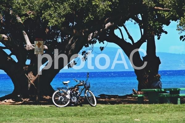 ローカルハワイの木陰の写真