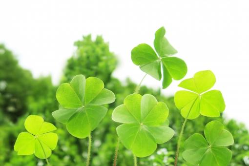 背景 テクスチャ 素材 背景画像 バックグラウンド バックグランド バックイメージ バッググラウンド 自然 植物 エコロジー 夏 春 環境 エコ クローバー eco 葉っぱ 四葉 四葉のクローバー 四つ葉 四つ葉のクローバー 葉 空 緑 グリーン さわやか 黄緑 自然エネルギー 若葉 初夏 三つ葉 ラッキー 幸福 幸せ 幸運 光 ハッピー 緑色 新緑 風景 明るい 屋外 コピースペース エコロジーイメージ 背景素材 クリーンエネルギー 草 晴れ イメージ シロツメクサ 縁起物 bg 白詰草 昼 日本 真夏 しろつめくさ 野原 テクスチャー 癒し 草原 花 草花 四月 五月 六月 いやし マクロ クローズアップ アップ 接写 美容 エステ 4月 5月 清潔 涼しい 涼しげ 青葉 爽やか リラクゼーション リラックス 健康 清々しい 5月 6月 7月 壁紙 テキストスペース バック 背景写真 6月 7月 8月 4月 清涼 爽快 景色 みどり 公園 戸外 かわいい きれい 綺麗 白 文字スペース シロツメグサ 清涼感 快晴 イエローグリーン イエロー 瑞瑞しい 黄緑色 黄 季節 シンプル グリーンイエロー ハート型 カタバミ 雨上がり 自然観察 散策 散歩 発見 上から ボケ味 レトロ ボケ ぼけ 風力発電 春イメージ 夏イメージ アウトドア 観察 レジャー 医療 ビジネス 福祉 白バック 白背景 美しい 黄色 ぼかし エネルギー 背景デザイン グラフィック 模様 後ボケ 緑の葉