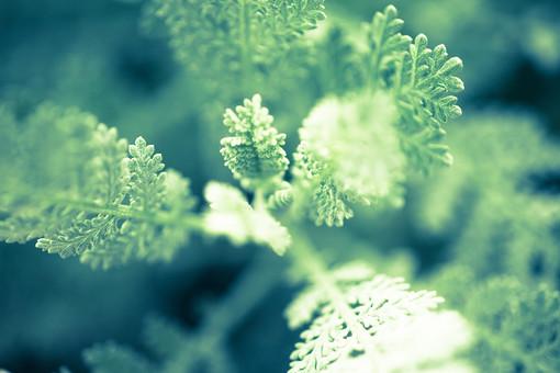 自然 植物 草 葉 葉っぱ 緑 野生 野草 陽射し 光 反射 成長 育つ 伸びる 密集 集まる 多い 沢山 ぼやける ピンボケ アップ 加工 無人 室外 屋外 風景 景色