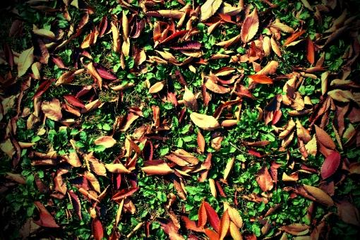秋 四季 雑草 グリーン 緑色 一面 葉っぱ 葉 散歩 季節 公園 枯れ葉 枯葉 落葉 紅葉 植物 落ち葉 赤色 赤い オレンジ色 黄色い きいろ 足元 静か カサカサ ふんわり 写真 素材 無料 フリーダウンロード 商用可 横位置