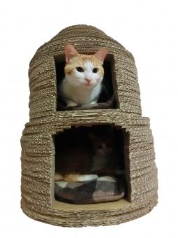 猫 ネコ 愛猫 ダンボール 家 ハウス 白 茶 顔 入った 親子 ピンクの鼻 家猫 飼い猫 室内猫 可愛い 目を開けた 顔を出す にゃらん ネコベッド 猫ベッド くつろぐ マイホーム 快適 寝そべる かわいい 2匹 2段ベッド 猫の家 動物