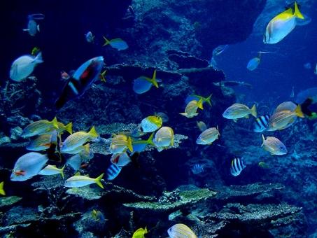 美ら海水族館 沖縄 水族館 熱帯魚 美ら海 okinawa