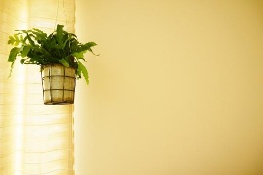 ナチュラル インテリア 観葉植物 グリーン 緑 植物 住宅 内装 壁 白い壁 窓辺 光 家庭 ハンギング ガーデニング 鉢 カーテン 白いカーテン 差し込む光 陽射し あたたかい コピースペース シンプル 新築 寝室 リビング リラクゼーション バックグラウンド 白 クリーム色 エコ eco 鉢カバー ワイヤー 吊るす 空間 癒し 明かり 葉 壁紙 壁紙素材 白い背景 壁紙デザイン 素材 背景 背景デザイン 背景素材 文字スペース 広告 チラシ 戸建 コメントスペース テキストスペース