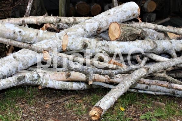 白樺 薪の写真