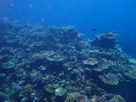 ダイバー 海 グレートバリアリーフ ダイビング 水中 岩 水 グレート バリア リーフ オーストラリア ケアンズ 外国 海外 透明 観光 世界遺産 旅行 バカンス 夏 サンゴ 珊瑚 サンゴ礁 スキューバ マリン スポーツ 水中写真 自然 エコ 環境