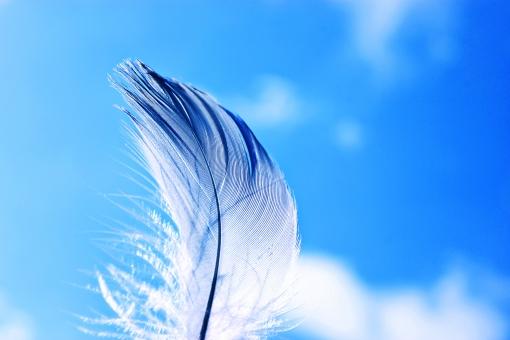 羽 フェザー 羽根 羽毛 毛  鳥 鳥の羽 はね 鳥 ふわふわ スティルライフ 無人 軽い 繊細 やわらかい 幻想的 ふんわり 明るい カラフル コピースペース ブルー 空 青空 雲 屋外 さわやか 未来 飛ぶ 飛躍