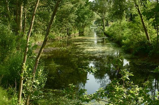 フランス パル近郊 ゴッホの村 農村 池 沼 自然 公園 自然 景色 のどかな村 田舎 穏やか 川 運河 緑のトンネル 林 森林 森の中 植物 木 細い木 葉っぱ 景色 村 芸術