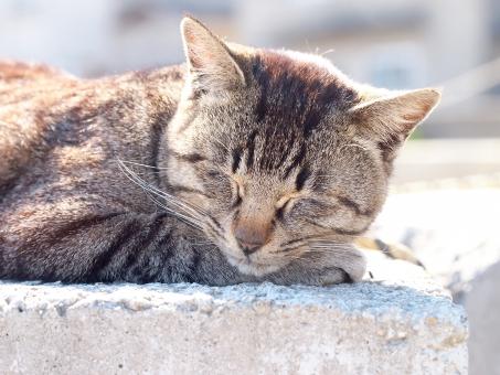 猫 ネコ ねこ 猫島 ネコ島 ねこ島 島猫 島ネコ 島ねこ ノラネコ ノラ猫 ノラねこ 野良猫 野良ねこ 野良ネコ のらねこ のらネコ のら猫 お昼ね おひるね お昼寝 ひるね 昼寝 昼ね ひなたぼっこ 日向ぼっこ ぽかぽか 爆睡 睡眠 熟睡