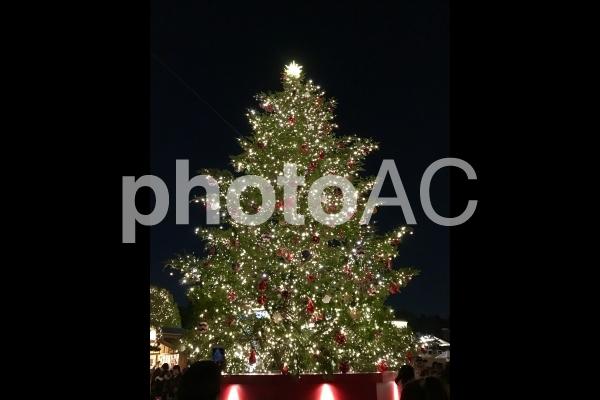 大きなクリスマスツリーとイルミネーションの写真