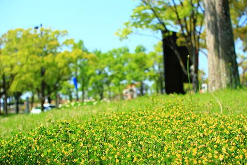 花畑 黄色い花 広場 原っぱ 自然 風景 景色 森林 緑 林 かわいい 小さい 春 夏 季節 葉っぱ 植物 美しい きれい 野草 草花 癒し 一面 群生 ピクニック