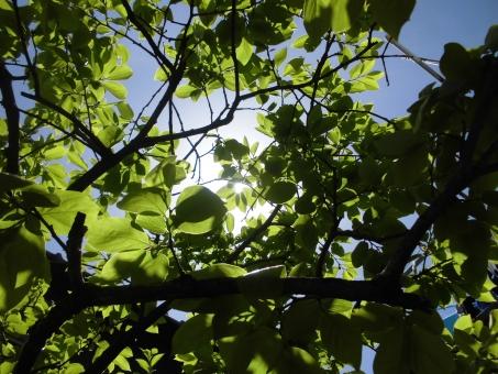 枝 春 緑 木々 木漏れ日 こもれび 癒し マイナスイオン 緑葉 葉っぱ 日光 晴れ かげ 影 植物